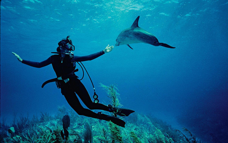 Sylvia Earle, Heroine of the Ocean